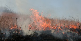 fire in pasture