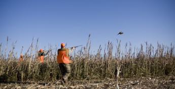 Hunting at Bigge Farm near Stockton, Kansas