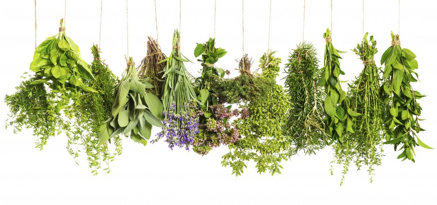 string of fresh herbs