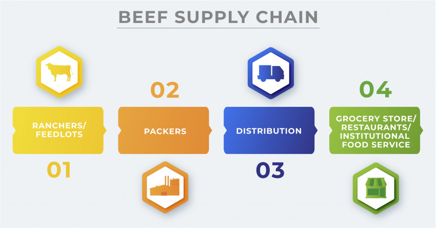 beef supply chain