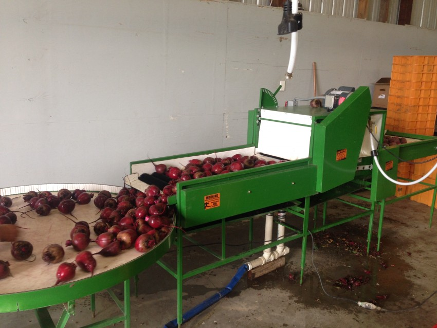 cleaning beets