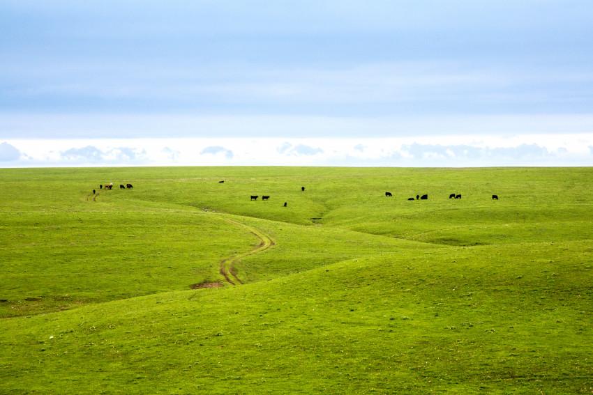 Kansas grassland