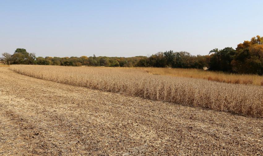 Overmillers soybean field