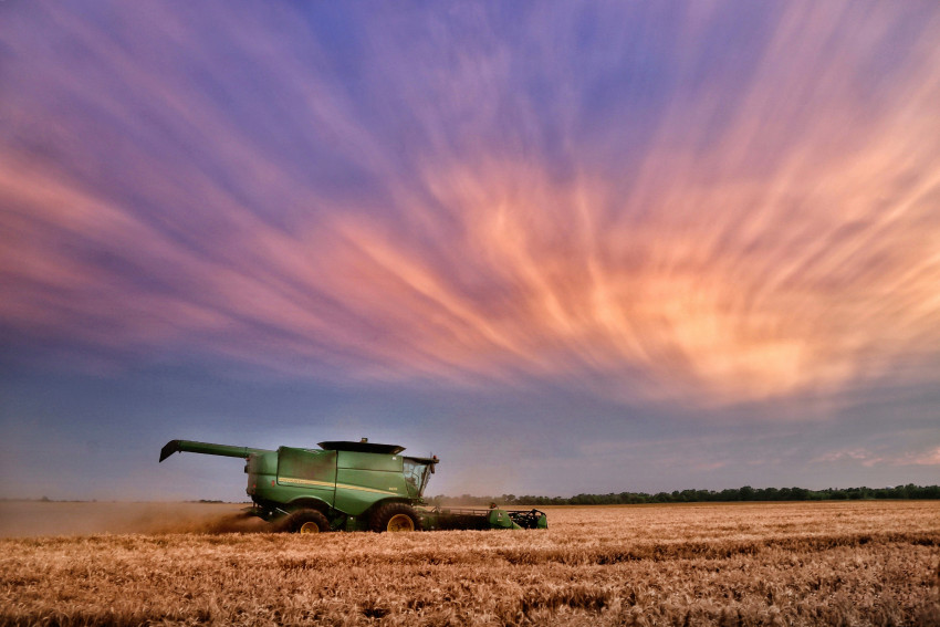 Wheat field in Kansas
