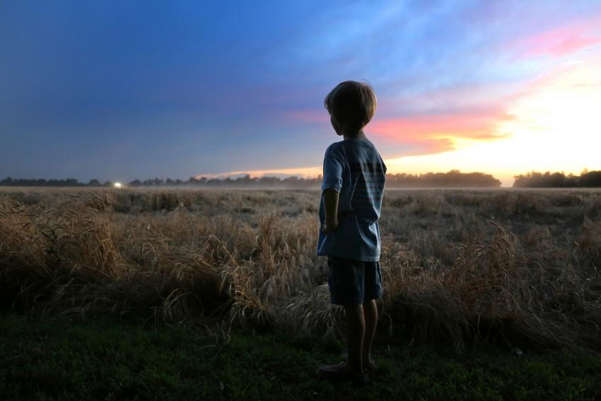Boy watches wheat harvest in Kansas