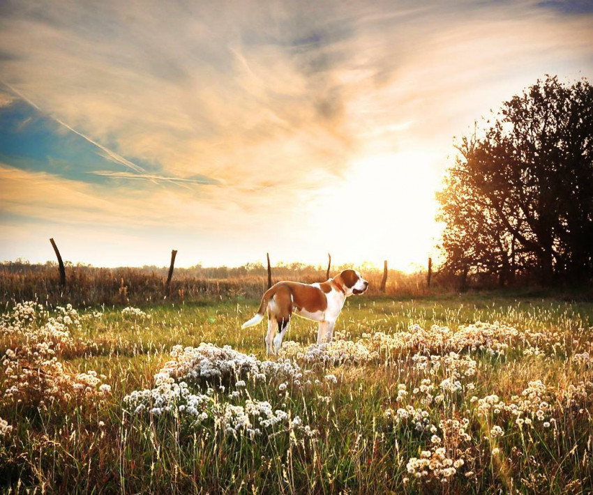 Margo the dog in Kansas