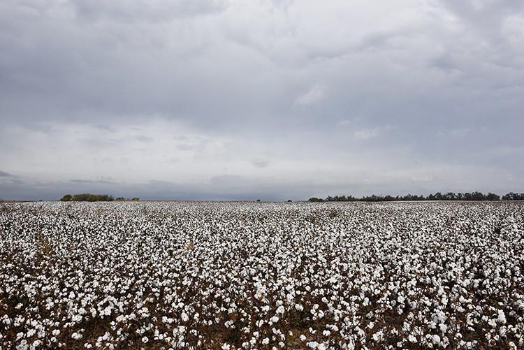 Kent Goyen cotton farmer