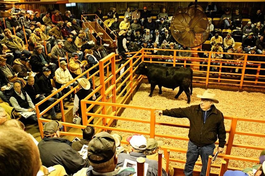 River Creek Farms bull sale