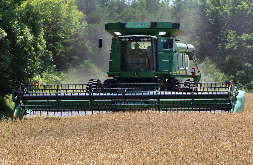 Ryan Stainbrook_harvesting wheat