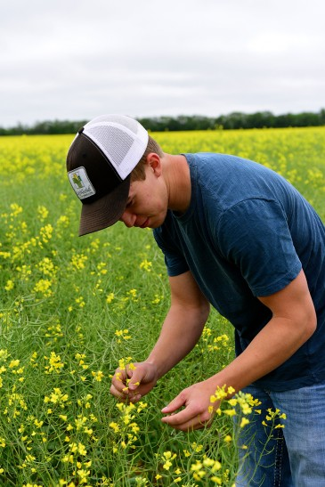 Connor Peirce in canola field