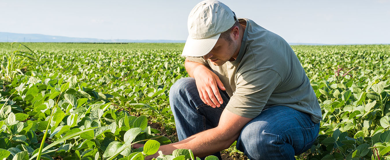 soybean farmer in field