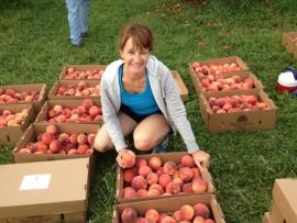 Peach Boxes
