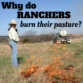 why do ranchers burn pasture art