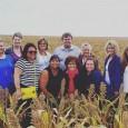 Kansas Sorghum Field