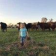 Brandi's daughter with cattle