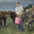 Farmer with donkeys and cattle