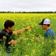 farmer and son in canola field