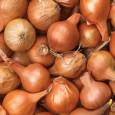 Caramelized Onion, Mushroom Gruyere Pastries