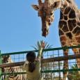 Hendrick's Exotic Animal Farm