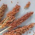 Sorghum for Supper