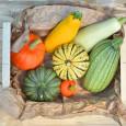 basket of winter squash